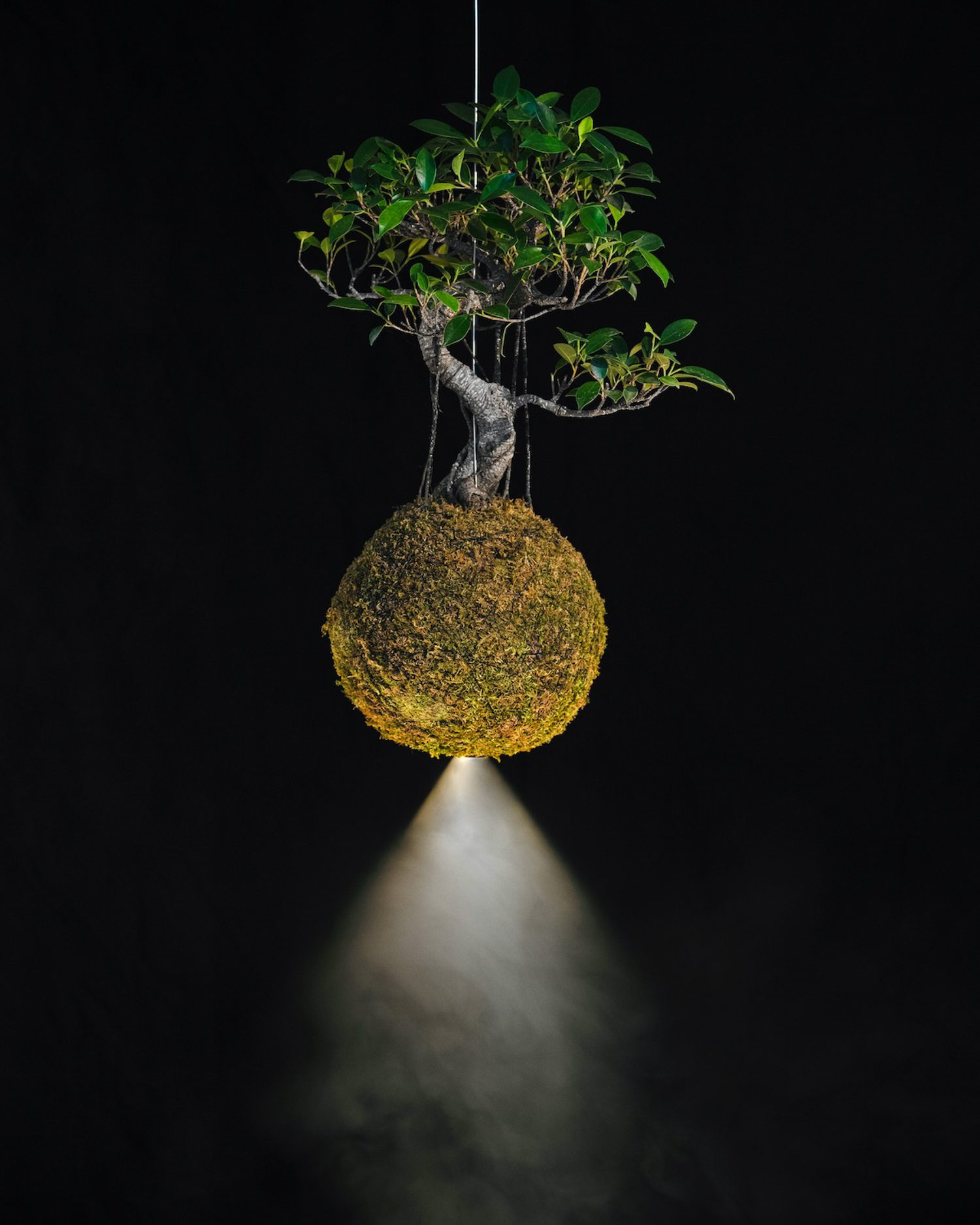Flora – specifically a Bonsai di Ficus Retusa – is integrated into the hand-assembled, rechargeable battery-powered, aluminum, brass, and iron Halo Leaf lamp by Mandalaki Studio, shown at Rossana Orlandi Gallery.